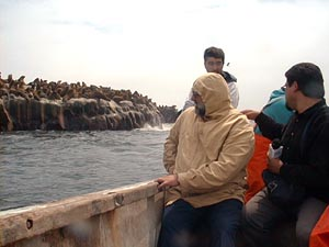 Loberias de Loanco en bote